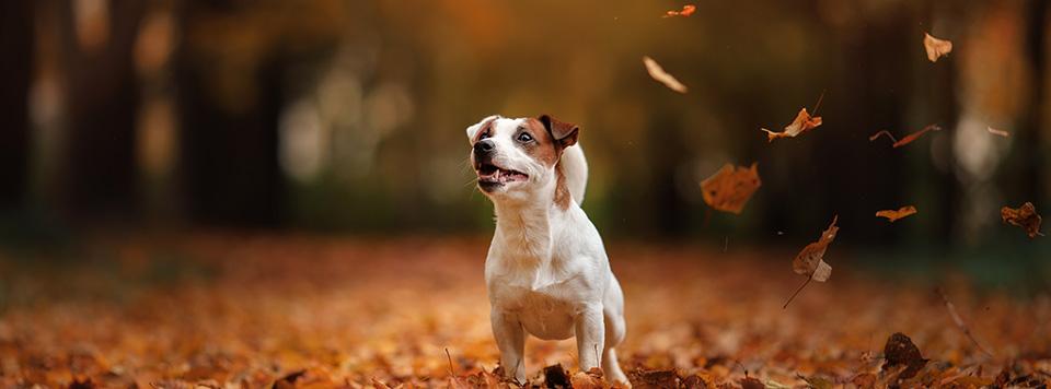 tipps-Hund-Herbst