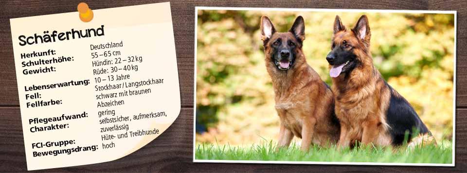 futter-fuer-schaeferhund