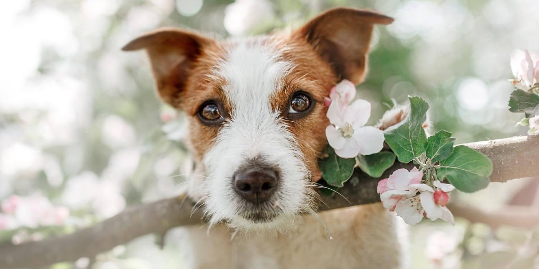 Hund im Frühling