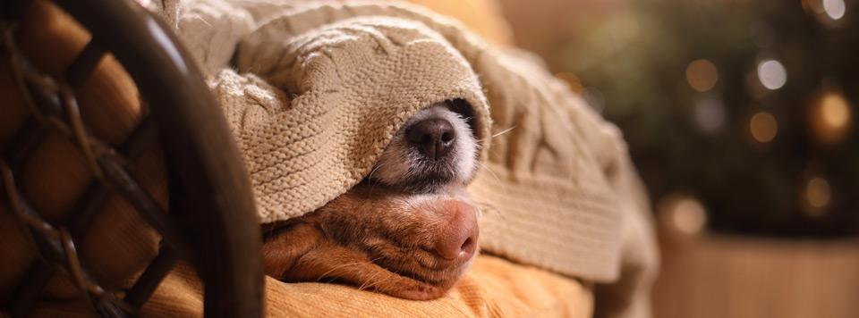 tipps-silvester-mit-hund