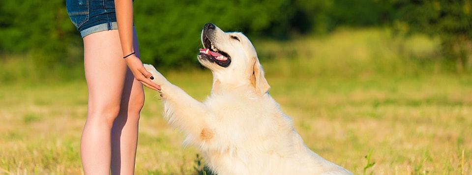 hund-kunststuecke-beibringen