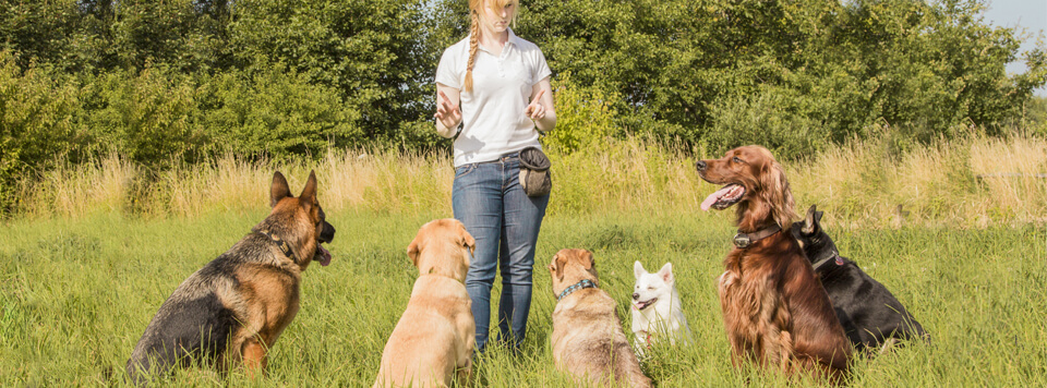 wichtigste-kommandos-hunde-erziehung