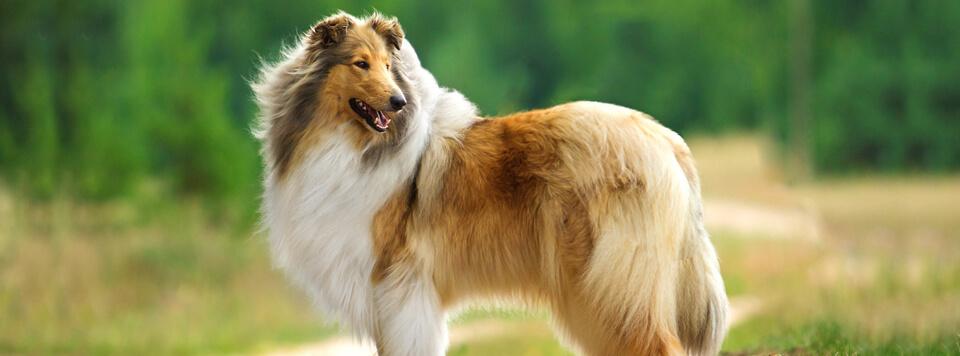 hundefell-fruehwarnsystem-fuer-gesundheit