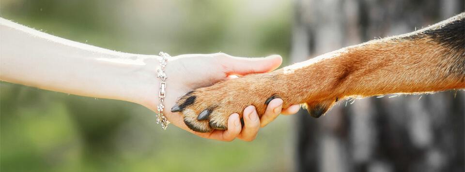 bund-gegen-missbrauch-von-tieren