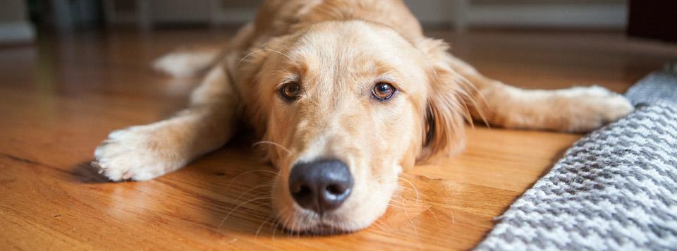 Würmer bei Hunden - Gesundheitstipps