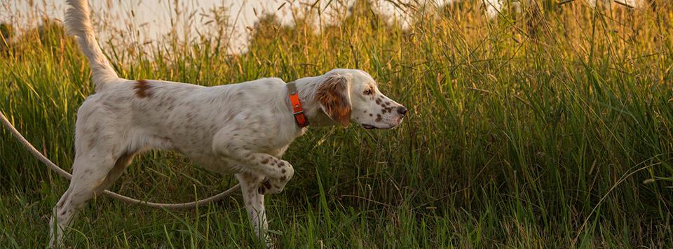 Mantrailing - Auslastung und Spaß für den Hund