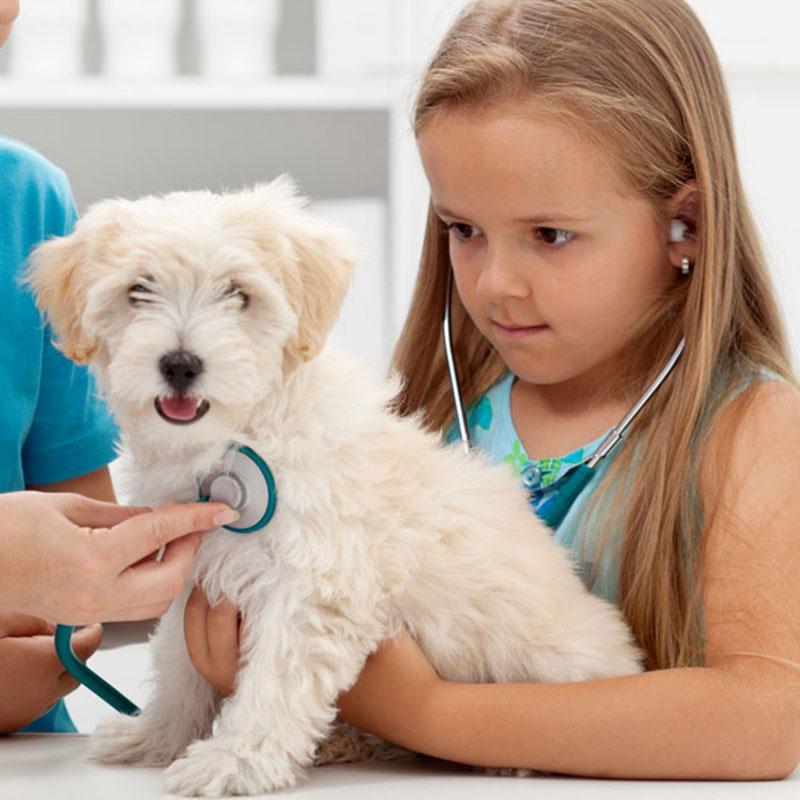 Welpen Impfung Entwurmung