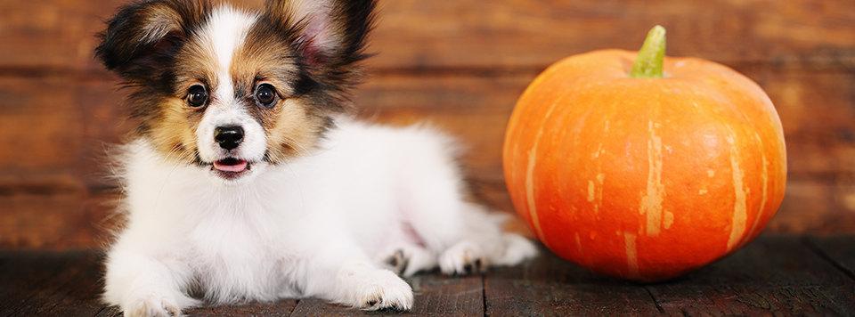 halloween-party-mit-hund