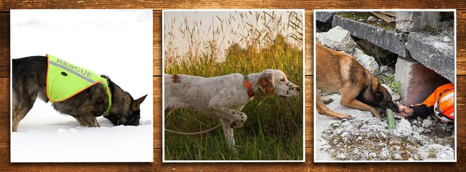 diensthunde-rettungshunde-aufgaben-futter