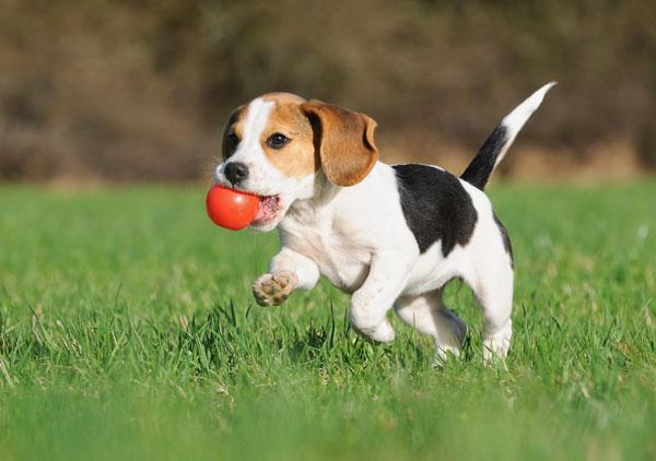 Welpe mit Ball Futterempfehlung