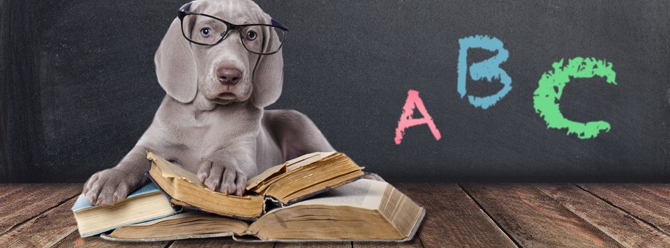 hundehalter-lexikon-und-kompendium