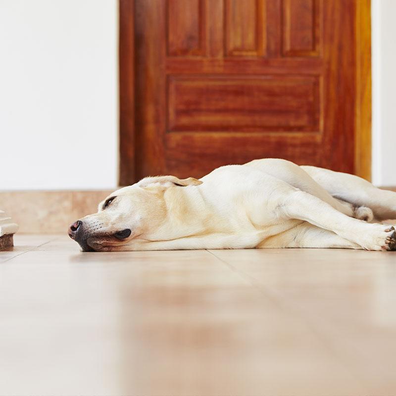 Pfotentipps Hund erbricht