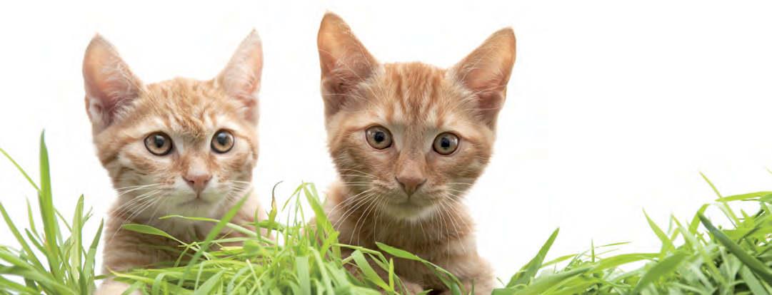 Katzenfreundschaft macht gluecklich