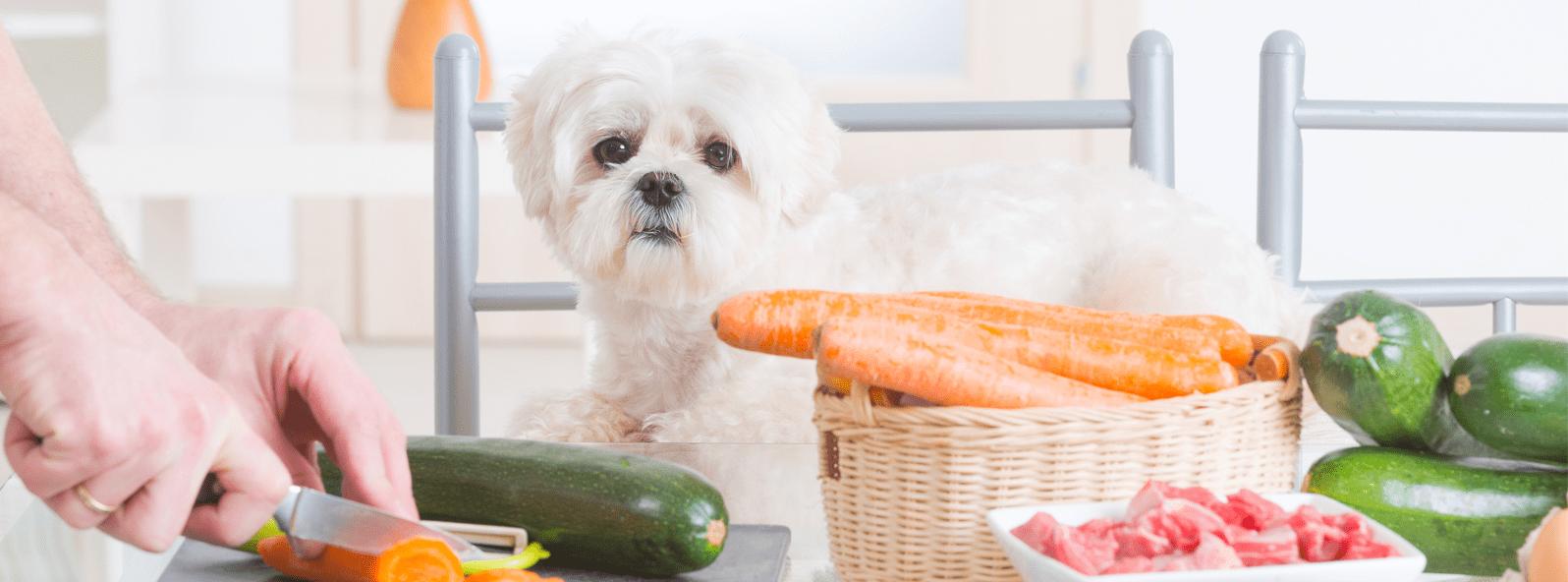 Fellverfärbung beim Hund - ist das Futter schuld?