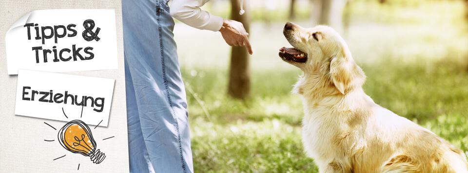 Tipps für die Hundeerziehung im Alltag
