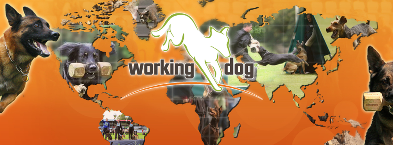 wokring-dog-hundeportal