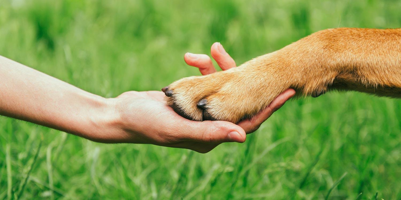 Tipps für die Pfotenpflege beim Hund