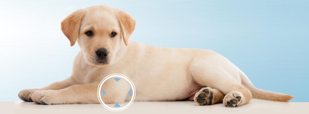 ellenbogendysplasie-beim-Hund