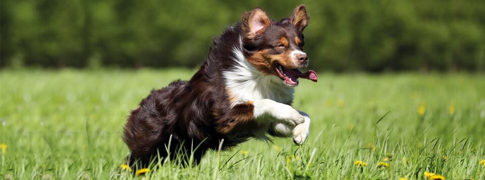 ansprueche-an-modernes-hundefutter