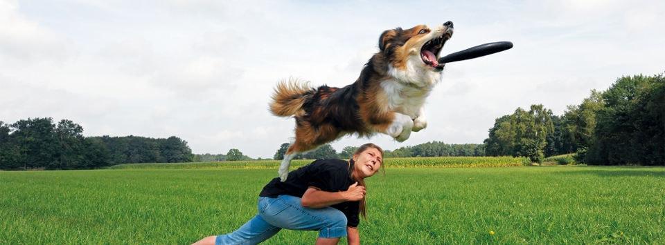 anleitung-hundefrisbee