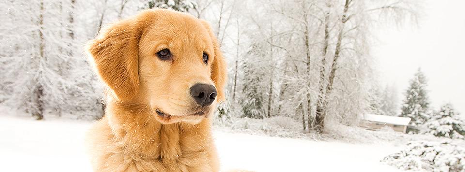 hund-im-winter-worauf-achten